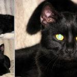 Photoshooting cu pisica