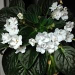 Planta care se crește singură