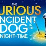 O întâmplare ciudată cu un câine la miezul nopții